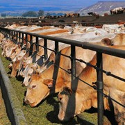 Добавки кормовые ветеринарные фото