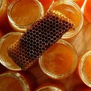 Пчелиный прополис, прополис фото