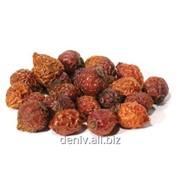 Плоды шиповника сушеные фото
