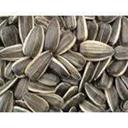 Закупка семян подсолнечника фото