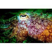 Услуги инструктора по плаванию подводное ориентирование Underwater Navigator фото