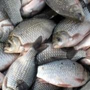 Экспертиза рыбы, рыбопродуктов и объектов водного промысла фото