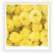 Бессмертник Сухоцветы водорастворимая бумага и другие декоративные элементы для изготовления мыла. фото