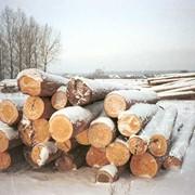 Услуги по лесозаготовке и трелевке фото