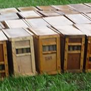 Пчелопакеты. Местная порода фото