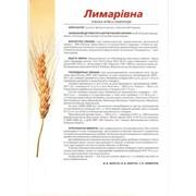 Семена озимой пшеницы Лимаривна (Лимарівна) фото