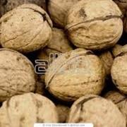 Закупка орехов, Грецкий орех фото
