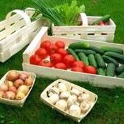 Изготовление тары - деревянного ящика из шпона для овощей, фруктов фото