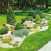 Проектирование Ландшафтного дизайна, озеленение территорий, озеленение благоустройство участка, ландшафтные работы фото