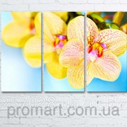 Модульна картина на полотні Орхідеї код КМ6090-031 фото
