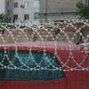 Плоское колючее спиральное заграждение- (аналог Егоза) фото