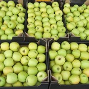Яблоки в Уральске фото