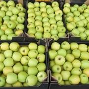 Яблоки в Таразе фото