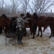 Разведение КРС, разведение и реализация лошадей фото