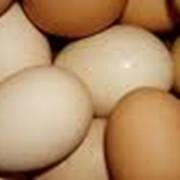 Яйцо куриное производства АО Север-птица фото