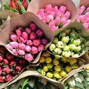Тюльпаны оптом к 8 марта по ценам производителя фото