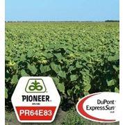 Семена подсолнечника устойчивые к гербициду ПР64Е83/PR64E83 (EXPRESS)® RM 48 фото