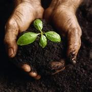 Универсальный Почвогрунт для комнатных растений 5 л. фото
