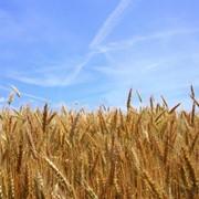 Аренда земли сельскохозяйственного назначения фото
