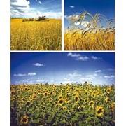 Страхование урожая сельскохозяйственных культур фото