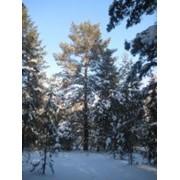 Зимний отдых, зимний отдых на природе. фото