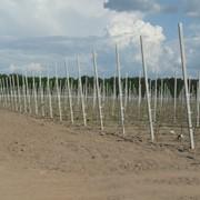 Опоры для фруктовых деревьев и виноградников фото