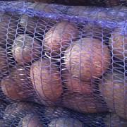 Картофель сортовой. фото