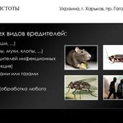 Очистка от инфекций, насекомых и грызунов фото