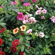 Комнатные цветы. фото