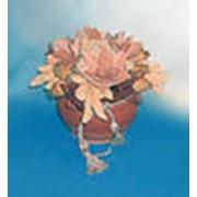Композиции из сухоцветов кантри фото