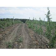 Стовпчики залізобетонні для винограду купити Вінниця фото