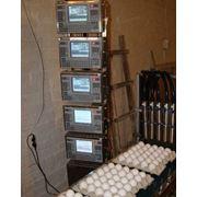 Маркировочный принтер PRIMUM серия А-5 маркировка яиц фото