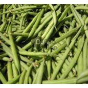 Фасоль спаржевая семена фото