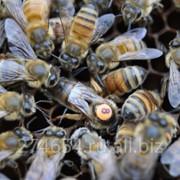 Пчелопакет 2019 фото