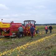 Совместное выращивание тыквы голосемянной, инвестирование оборудованием фото