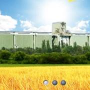 Хранение зерна от компании Хлебная база №76 фото
