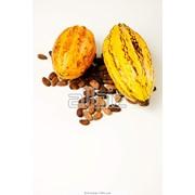 Какао бобы, купить, опт, розница, Украина фото