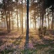 Отдых и оздоровление для всей семьи в лесу фото