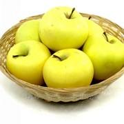 Яблоки Голден на экспорт фото