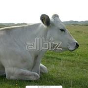 Разведение сельскохозяйственных животных фото