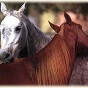 Романтическая прогулка на лошадях вдвоем фото
