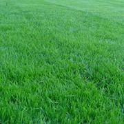 Посев газонов с последующим уходом фото
