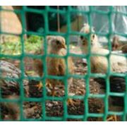 Сетка для птичников фото