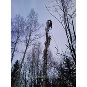 Удаление дерева по частям с подвешиванием фото
