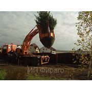 Посадка крупномерных деревьев фото