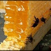 Пчелиный мед фото