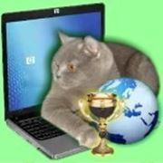 Вторая выставка кошек он-лайн фото
