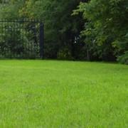 Озеленение территории,устройство газона фото