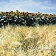 Регуляторы роста (Nufarm, Chemtura, BASF AG) фото