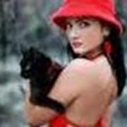Родовспоможение кошкам фото